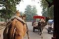 Approach to Taj Mahal (23188050926).jpg