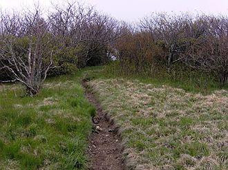 Thunderhead Mountain - The Appalachian Trail approaching the summit of Thunderhead Mountain.
