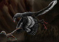Archaeopteryx lithographica by durbed.jpg