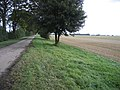 Archer's Drove, Thorney, Cambs - geograph.org.uk - 62791.jpg