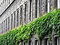 Architectural Detail - Trinity College - Dublin - Ireland - 02 (42589562215).jpg