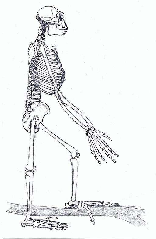 Ardipithecus Gesamt1