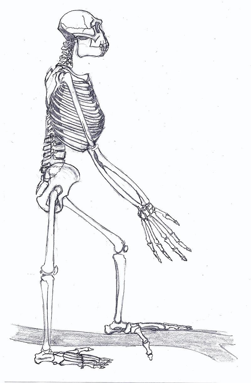 Ardipithecus Gesamt1.jpg