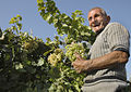 Armenian Happy Farmer.jpg