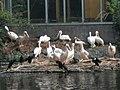 Artis, Zoo, Dierentuin - panoramio (11).jpg