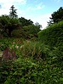 Ascog Hall Gardens (35942653770).jpg