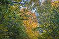 Au bonheur de l'automne au parc Mont-Royal (15341774400).jpg