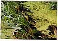August Der Alt Rhein - Magic Rhine Valley Photography 1989 - panoramio.jpg