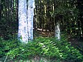 August Mount Kandel Masif Hochschwarzwald - Master Black Forest Photography 2014 - panoramio (8).jpg