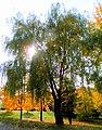 Autumn13Slovakia11.JPG