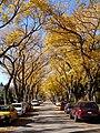 Autumn Street (5168376749).jpg