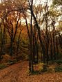 Avala jesen.jpg