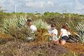 BLM and Volunteers Spend NPLD at Jupiter Inlet Lighthouse Outstanding Natural Area (15406995305).jpg