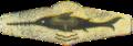 BW Tätigkeitsabzeichen Schwimmtaucher (scan).png