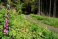 Ballycastle forest - geograph.org.uk - 844380.jpg