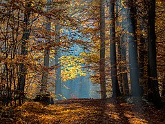 Bamberg Bruderwald Herbst-20151102-RM-110637.jpg