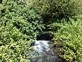 Banias River06.JPG