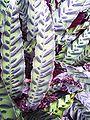 Batik leaves2.jpg