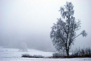 Das Bild 'Baumundnebel2' wurde im oberfränkischen Sauerhof, Deutschland, aufgenommen.