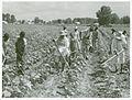 Bayou Bourbeaux Plantation operated by Bayou Bourbeaux Farms... (3110574028).jpg