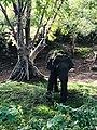 Beauty of the nature Elephant Kandalama Sri lanka 1.jpg