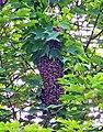 Bee swarm day2.jpg