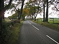 Beech lined road, Babbithill - geograph.org.uk - 1593426.jpg