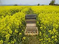 Beehive in a field of rape at Ballykelly. - geograph.org.uk - 430336.jpg