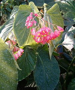 plante interieur fleur