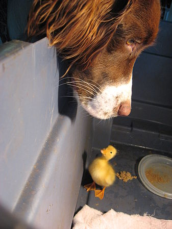 Beike with duckling.jpg