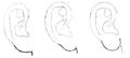 Bertillon - Identification anthropométrique (1893) 061.1 n&b.png