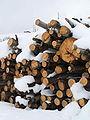 Biella-catasta di legna innevata al Trecciolino-2.jpg
