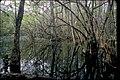 Big Cypress National Preserve, Florida (99a1838f-c770-46c6-9b82-927ff0af8f62).jpg