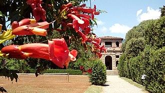 Capannori - Image: Bignonia Marlia