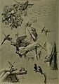 Bird lore (1914) (14753458274).jpg