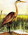 Birds that hunt and are hunted; life histories of one hundred and seventy birds of prey, game birds and water-fowls (1912) (14749220142).jpg