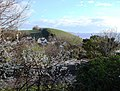 Blackthorn bush, Sugar Loaf, Paignton - geograph.org.uk - 1225856.jpg