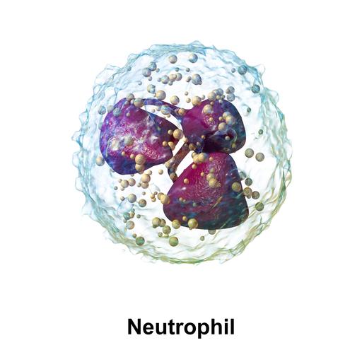 Blausen 0676 Neutrophil