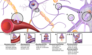 Holonomic brain theory - A Few of the Various Types of Synapses