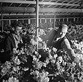Bloemen in Aalsmeer, Bestanddeelnr 901-3323.jpg