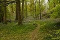 Bluebell Woods 2 - Flickr - Son of Groucho.jpg