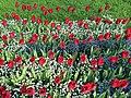 Blumenbeet - panoramio.jpg
