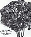 Bolgiano's spring 1970 (1970) (20391224085).jpg