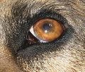 Booduh eye.JPG