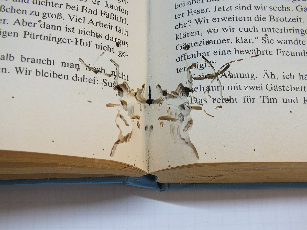 Bed Bugs And Books