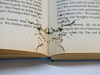 Bookworm (insect) - Traces of a bookworm in a book