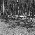 Bosbescherming, parken, herders, schaapskudden, Nationaal Park Veluwezoom, Zypen, Bestanddeelnr 165-0812.jpg