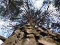 Bosc de Can Deu el 2004 14.jpg