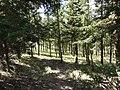Bosque - Área de Camping - panoramio.jpg
