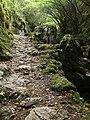 Bosque Mitológico III.jpg